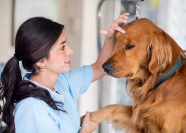 Você sabe o que faz um auxiliar de veterinário?
